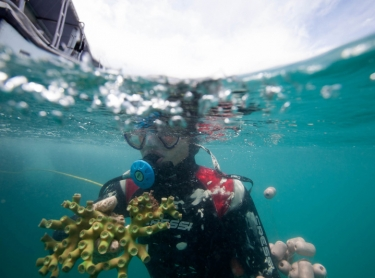 Daniel Kimberley from Monsoon Aquatics (blue shirt) and his two divers Shane Sweeney (blond) and Josh Palmer diving in waters off the Top End. Collecting coral and tropical fish for the aquarium industry