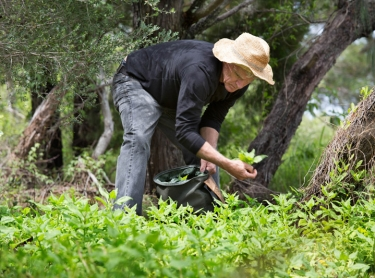 Peter Hardwick forages for bush tucker and various native plants for use in NSW restaurants