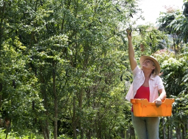 Sherryl Rennie of Possum Creek Bush Foods on her property near Bangalow that grows bush tucker including fingerlimes and other horticulture