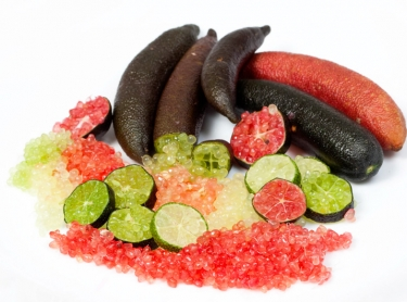 Fingerlimes are a native fruit found in northern NSW and southern Queensland. It is a bush tucker food eaten by Aboriginal people and now farmed for the gourmet food market and export.