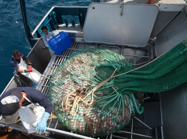 Territory Harvest trawler at sea up to 200 ms from Darwin. Fishermen use nets to bring in the fish and then sort them below decks