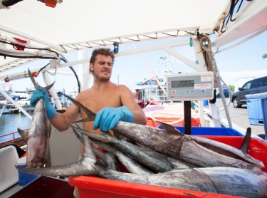 Hemi Poutou and his crew unload a cargo of mackerel at the Duck Pond, after a trip to the Arafura Sea - Hemi (black beard), Liam Williams (no/littke beard) and Scott Fantson (brown beard/tatts)