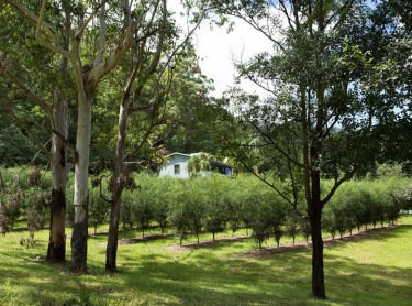 Fingerlimes - the property of Louise and John Reid at Jiggi, near Lismore in northern NSW