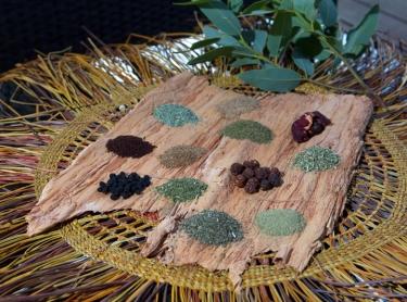 Nitmiluk NP - Cicada Lodge tourism resort - tourism destination - native foods and herbs - bush tucker