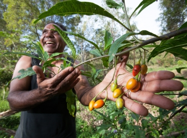 Lisa Carroll and Ross Macdougald operate Native Extracts, a business in northern NSW, that extracts essential oils and active ingredients from native plants. They source their plants from indigenous communities (such as the Githabul community - Rob and Gloria Williams) and small plantation growers like Sheryl Rennie of Possum Creek Bush Foods