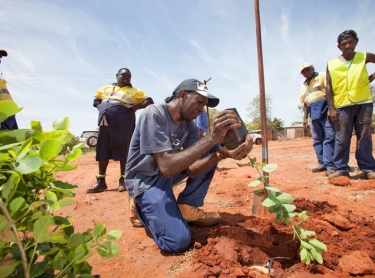 Gubinge, also known as Kakadu Plum, is grown around Broome in Western Australia. The traditional bush tucker of Aboriginal people is high in antioxidents and has the most Vitamin C of any plant in the world. Lesley Possum and workers at Bidyadanga plant gubinge trees.
