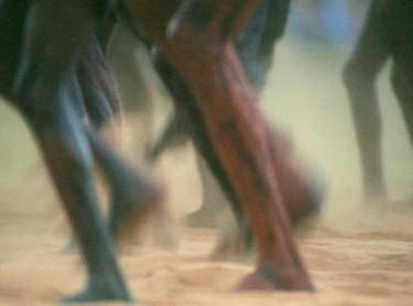 Yolngu Aboriginal people of north-east Arnhem Land participate in the Garma Festival of traditional culture at Gukula, NT. Photographer: David Hancock. Copyright: SkyScans.