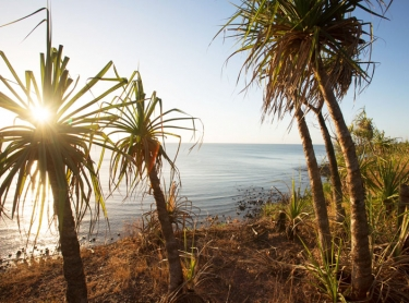 Images from Elcho Island, Arnhem Land, showing the coastal landscape and flora