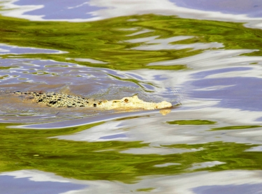Jumping Crocodile tour on the Adelaide River, Top End