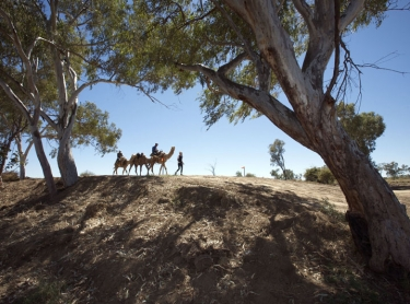 The Sheikh El Zayed camel race at Hughenden during Arid Lands festival in western Qld, australia.