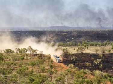 Road train carrying cattle from Limbunya station travels along an outback rod in the Victoria River District of the Northern Territory, Australia. transport road outback truck vehicle