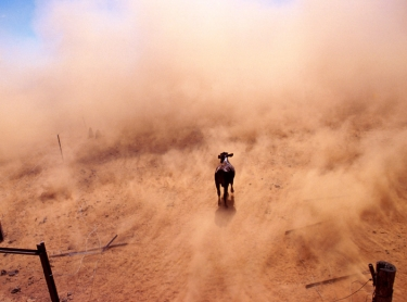 A helicopter is used to muster cattle on an Outback property in northern Australia. aerial aircraft cattle muster Photographer: David Hancock. Copyright: SkyScans.