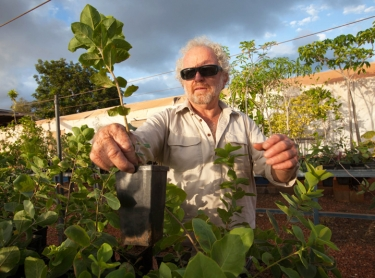Gubinge, also known as Kakadu Plum, is grown around Broome in Western Australia. The traditional bush tucker of Aboriginal people is high in antioxidents and has the most Vitamin C of any plant in the world. Kim Courtney sorts young plants at the Kimberley Training Institute