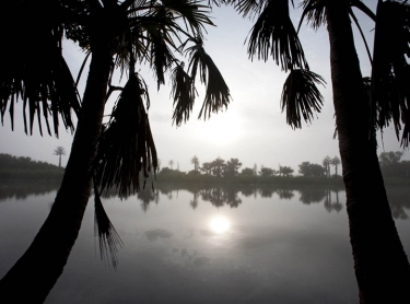 Arafura Swamp in Arnhem Land in northern Australia, the largest swamp in the southern hemisphere. Mist and fog creeps through the area after a late dry season storm, signaling the start of the wet