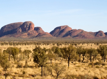 Outback road through the red sand dunes and spinifex grass and desert she-oaks of central australia - landscape